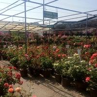 Photo Taken At San Gabriel Nursery Amp Florist By Jonathan O On
