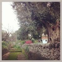 2/18/2013にKeitがMasseria Il Frantoioで撮った写真