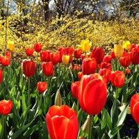 3/15/2013 tarihinde Faith H.ziyaretçi tarafından Dallas Arboretum and Botanical Garden'de çekilen fotoğraf