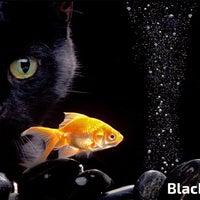 Снимок сделан в Blackfish Adana пользователем özkan ö. 1/5/2016