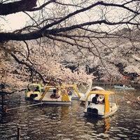 3/24/2013にd_sardineが井の頭恩賜公園で撮った写真