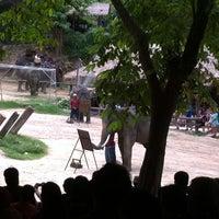 Foto scattata a Maesa Elephant Camp da Z J🌏KE Z B. il 7/21/2013