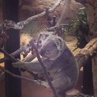 Foto scattata a Koala Exhibit da Brian G. il 6/23/2013