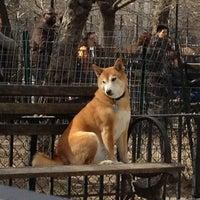 4/7/2013 tarihinde Bonnie C.ziyaretçi tarafından Tompkins Square Park Dog Run'de çekilen fotoğraf