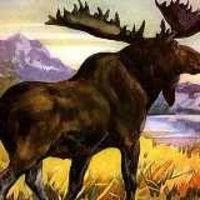 mogadore moose lodge