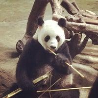Das Foto wurde bei Xiang Jiang Safari Park, Guangzhou von Matt W. am 6/21/2015 aufgenommen