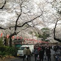 3/24/2013 tarihinde Trichoides -.ziyaretçi tarafından Ueno Park'de çekilen fotoğraf