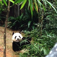 Photo prise au Singapore Zoo par Lystraa C. le1/20/2013