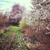 4/20/2013 tarihinde Mai N.ziyaretçi tarafından Arnold Arboretum'de çekilen fotoğraf