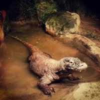 Foto tomada en Houston Zoo por Avigdor - Realtor M. el 11/3/2012