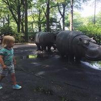 5/26/2015にСусикがHippo Playgroundで撮った写真