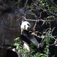9/17/2013 tarihinde llorch D.ziyaretçi tarafından San Diego Hayvanat Bahçesi'de çekilen fotoğraf