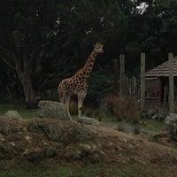 4/7/2013 tarihinde Phil R.ziyaretçi tarafından Wellington Zoo'de çekilen fotoğraf