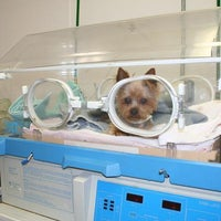 รูปภาพถ่ายที่ Bulger Veterinary Hospital โดย IVG Network of Hospitals เมื่อ 11/15/2013