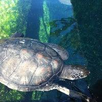 Photo prise au Maui Ocean Center, The Hawaiian Aquarium par Emily F. le10/16/2011