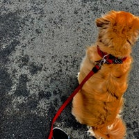 Overpeck Dog Park - Dog Run in Leonia