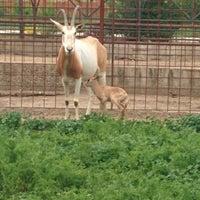 Foto tomada en ZOO KOKI (Parque zoológico y botánico) por Iñaki H. el 5/1/2014