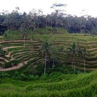 Снимок сделан в Tegallalang Rice Terraces пользователем Andrey S. 5/4/2013