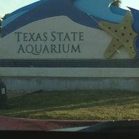 3/14/2013 tarihinde Ale Q.ziyaretçi tarafından Texas State Aquarium'de çekilen fotoğraf