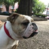 Снимок сделан в Jardin Morelos пользователем Mike G. 6/13/2017
