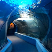 Photo prise au Maui Ocean Center, The Hawaiian Aquarium par Galen H. le11/2/2018