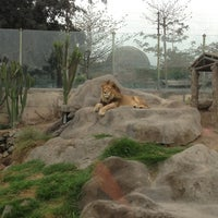 Parque Zoologico Huachipa Zoo In Ate Desarrolla programas de conservación e investigación con especies en riesgo crítico o situación vulnerable, como por ejemplo. parque zoologico huachipa zoo in ate