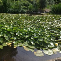 5/27/2013にMariam S.がDescanso Gardensで撮った写真