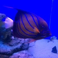Abyss Marine Fish Aquarium