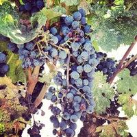 Photo prise au Regusci Winery par Tasha Mini le9/8/2013