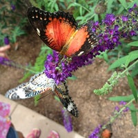 Photo taken at Butterfly Wonderland by Nicole H. on 6/22/2013