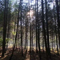 Photo prise au Nejlepčí houbařskej les par Bara W. le9/11/2015