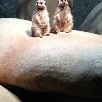 Снимок сделан в Zoo Basel пользователем ignd 2/3/2013