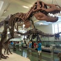 Foto scattata a American Museum of Natural History da joy m. il 7/11/2013