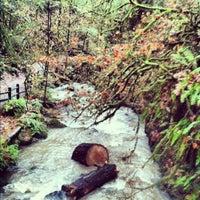 Снимок сделан в Forest Park - Wildwood Trail пользователем Edward H. 11/22/2012