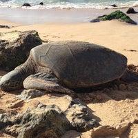 Foto tomada en Laniakea (Turtle) Beach por Luke M. el 11/14/2012
