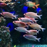 Photo prise au Maui Ocean Center, The Hawaiian Aquarium par Laura M. le3/31/2015