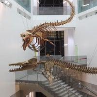 Das Foto wurde bei University of Michigan Museum of Natural History von University of Michigan Museum of Natural History am 8/17/2018 aufgenommen