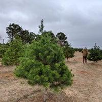 Elgin Christmas Tree Farm.Elgin Christmas Tree Farm Farm