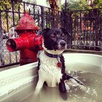 6/30/2013 tarihinde ºDamian W.ziyaretçi tarafından Tompkins Square Park Dog Run'de çekilen fotoğraf