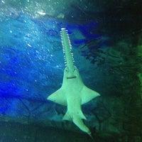 Foto tomada en Underwater World por Cinzia J. el 4/9/2013