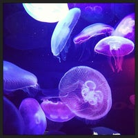 Photo prise au Aquarium of the Bay par Neil A. le5/1/2013