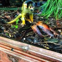 8/6/2018 tarihinde Shonikwa W.ziyaretçi tarafından Wellington Zoo'de çekilen fotoğraf