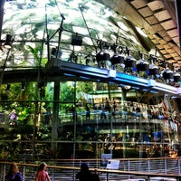 Foto scattata a California Academy of Sciences da Daniel F. il 5/22/2013