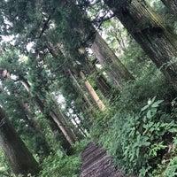 9/13/2018にのんちゃんが箱根旧街道 杉並木で撮った写真