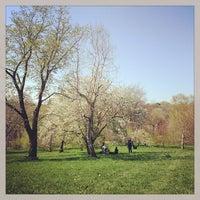 4/28/2013 tarihinde Melissa L.ziyaretçi tarafından Arnold Arboretum'de çekilen fotoğraf