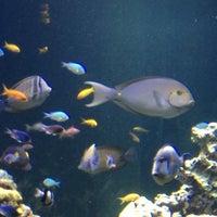 Photo Taken At Virginia Aquarium Amp Marine Science Center By Kıymet K