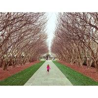 3/17/2013 tarihinde Eric H.ziyaretçi tarafından Dallas Arboretum and Botanical Garden'de çekilen fotoğraf