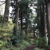 11/12/2017にSujung L.が箱根旧街道 杉並木で撮った写真