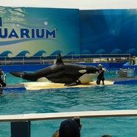 รูปภาพถ่ายที่ Miami Seaquarium โดย Paola R. เมื่อ 6/6/2013