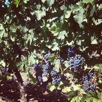 9/5/2013에 NapaValleyTour님이 Regusci Winery에서 찍은 사진